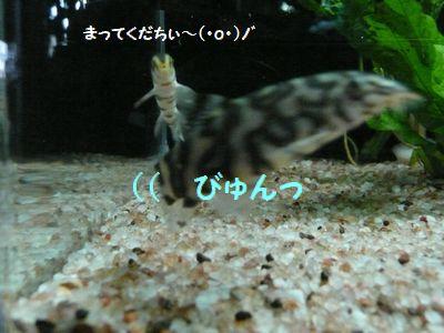 shima_bote.jpg